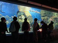 碧南海兵水族館